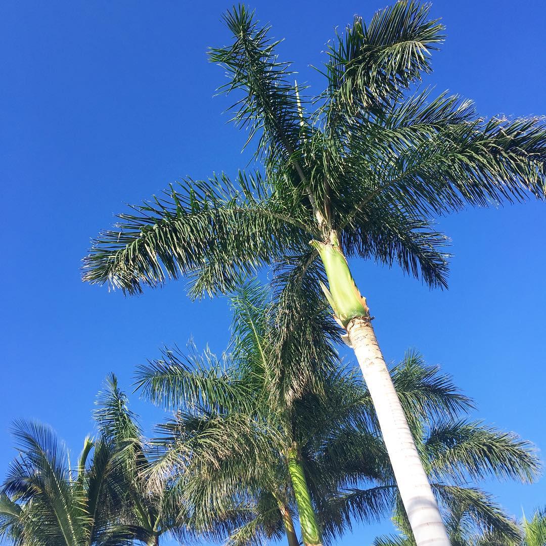 hothere tenerife holiday letzterurlaubzuzweit palmtrees Weiterlesen